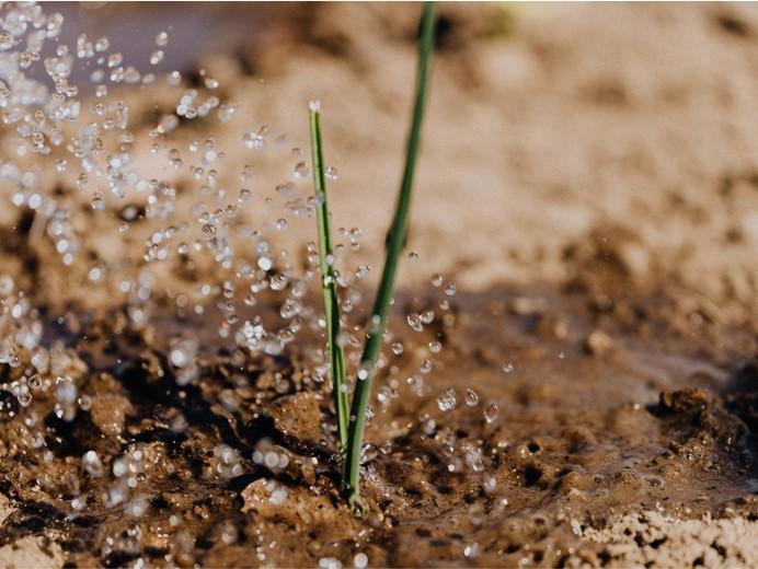 Met deze hulpmiddelen geeft u uw planten de juiste hoeveelheid water